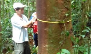 ECUADOR: ASESORAMIENTO GRATUITO FORESTAL SE AFIANZA EN EL PAÍS