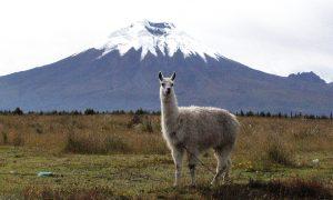 Parque Nacional Cotopaxi primera área protegida en Latinoamérica con Certificación Internacional Tourcert