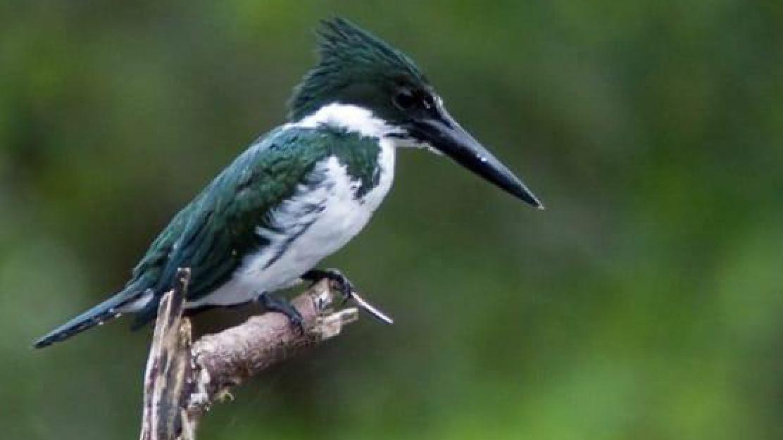 La Reserva de Biosfera Yasuní un gran santuario de aves en Ecuador