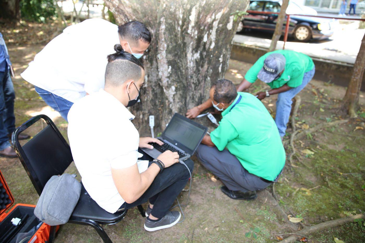 MIAMABIENTE se apoyará  en el uso de tomógrafos para evidenciar condición de árboles y combatir la tala ilegal
