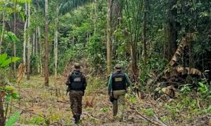 Ibama realiza la Operación Amazonia Verde II para combatir la deforestación ilegal en Roraima